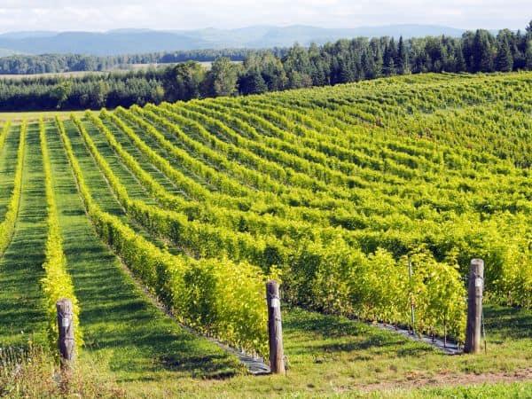 vignoble à vendre dans lanaudière